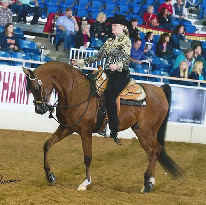 Dabomb Dot Copple Show Horses